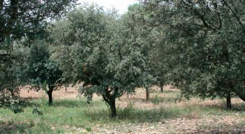 Aragón desarrolla nuevos sensores optimizar riego plantaciones truferas