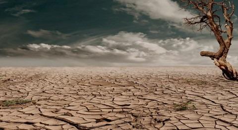 Costras biológicas, unas aliadas desertificación