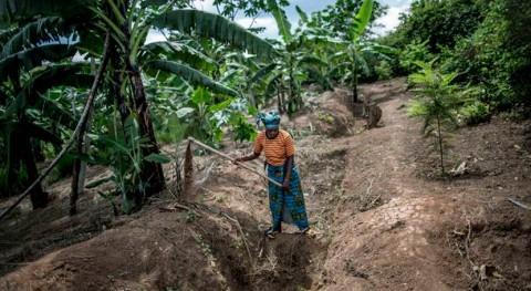 Aprobados nuevos fondos combatir deforestación, desertificación y cambio climático