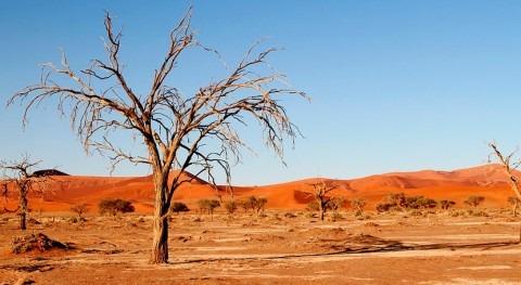 ONU exige soluciones largo plazo sequía y desertificación