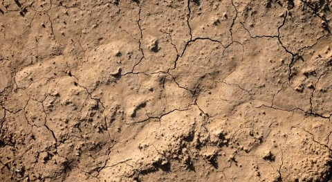 Fecha guardar calendario: Día Mundial Lucha Desertificación y Sequía