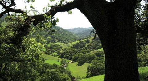 Saint-Gobain PAM se suma objetivos Día Mundial Medio Ambiente