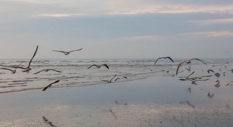Doñana, riesgo colapsar gestión local más activa