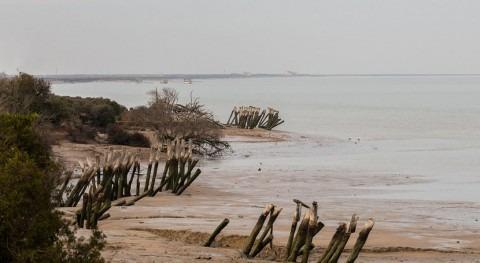 Doñana, Delta l'Ebre y L'Albufera Valencia, humedales al borde colapso
