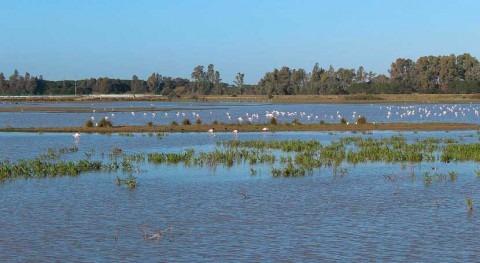 busca conocimiento exhaustivo procesos hidrológicos Doñana