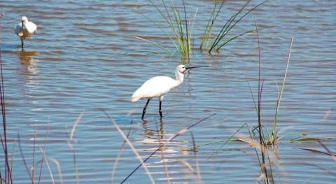 España incumple recomendaciones UNESCO proteger Doñana