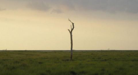 El conflicto del agua en Doñana continúa enquistado (Wikipedia/CC).