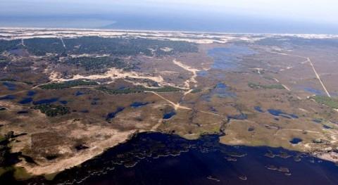 Urbanismo y regadío están secando Doñana: ¿hay solución?