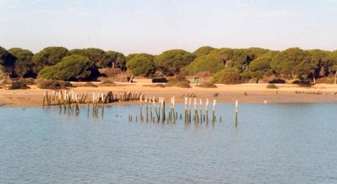 organizaciones ecologistas reclaman cierre inmediato pozos ilegales Doñana