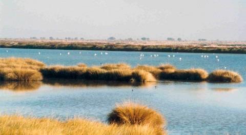 1.000 inspecciones Doñana detectar pozos ilegales