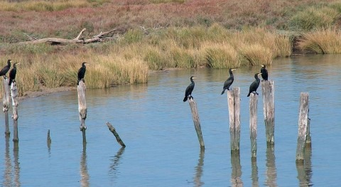 Naturaleza y agua: UE insta España intensificar protección Doñana