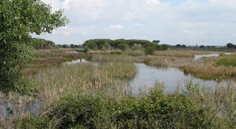 Multa 17.000 euros abrir pozo y captar agua permiso entorno Doñana