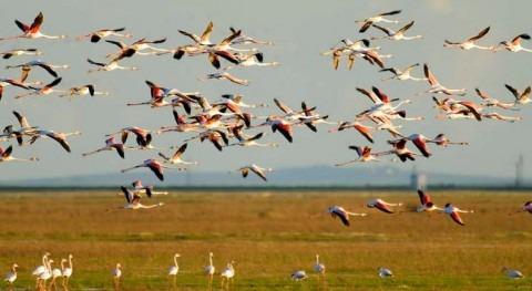 Doñana (WWF).