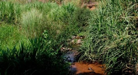Panamá continúa medidas prevenir inundaciones dragado río Cabra