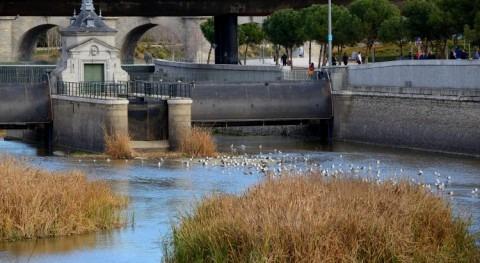Madrid abrirá presa 9 río mantener renaturalización Manzanares