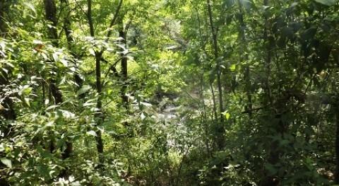Crímenes Agua: Manglares Ébano (Parte 1)