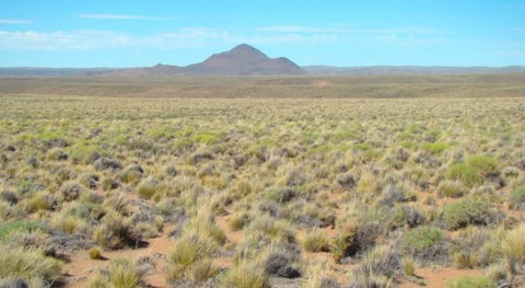 estudio muestra cambios que provocará crisis climática ecosistemas áridos