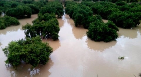 Vega Baja recibirá 16 millones evitar otra DANA sistemas drenaje sostenible