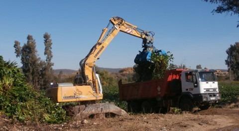 Confederación Hidrográfica Guadiana aumenta dispositivo lucha camalote