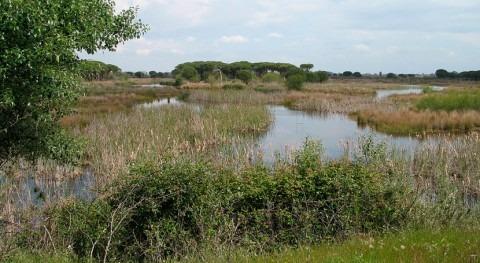 Doñana cumple 50 años amenazas como extracción agua y emergencia climática