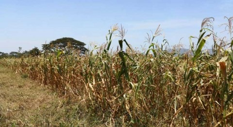 Salvador continuará escasez lluvias próximos tres meses