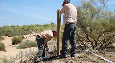 proyecto Conhabit preserva tomillo carnoso Marismas Río Piedras y Flecha Rompido
