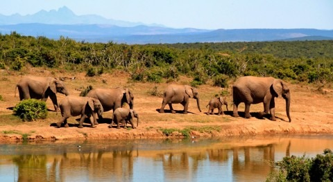 bacteria transmitida agua causa muerte centenares elefantes Botsuana