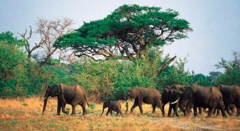 bacteria agua podría haber causado nuevas muertes elefantes Botsuana