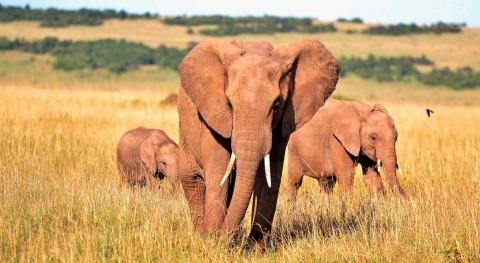 cambios ciclo agua podrían modificar hábitat elefantes asiáticos