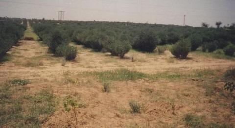 Declarada emergencia agropecuaria sequía seis provincias argentinas