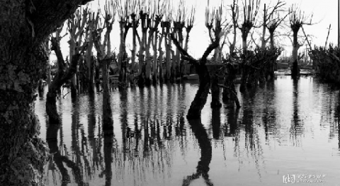 agua sepulta pueblo, que después vuelve emerger: Villa Epecuén