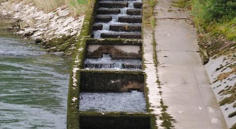 Escaleras peces: ¡Abran paso vida!