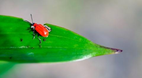¿Cómo responden insectos al cambio climático corto plazo?