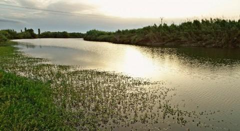 ríos 10 cuencas españolas están contaminados plaguicidas y tóxicos, Ecologistas