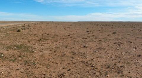 estepa esparto argelina, peligro desertificación