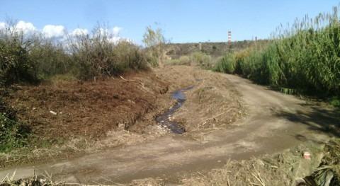 Cataluña elimina especies vegetales invasoras torrente que transcurre Constantí