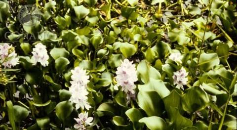Especies invasoras representan tercera causa pérdida biodiversidad México