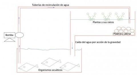 ¿Es posible combinación agro-acuicultura?