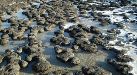 Estromatolitos, ¿tienen mucho que contar?
