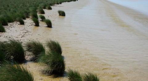 investigación demuestra que estuarios mayor salinidad contienen más nutrientes