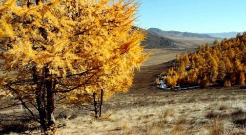 Estudio: árboles, bosques y uso tierra zonas áridas planeta