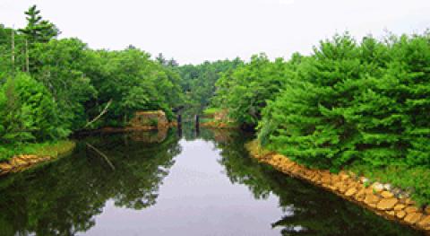 Eutrofización: efectos contaminación agua y tratamiento