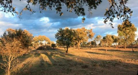 información pública proyecto regadío 1.200 hectáreas Monterrubio Serena