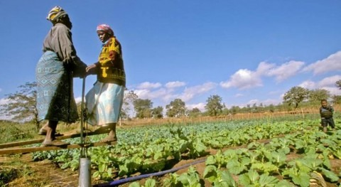 FAO y Fondo Adaptación ayudan países vulnerables combatir cambio climático