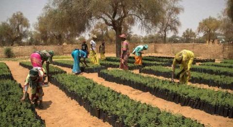 Comienza nueva Década Naciones Unidas destinada Restauración Ecosistemas