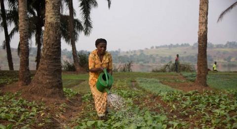 Alemania ayudará agricultores afrontar COVID-19 y fenómenos meteorológicos extremos