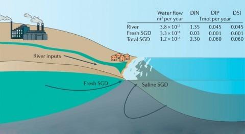 descarga agua subterránea, esencial funcionamiento ecosistemas costeros