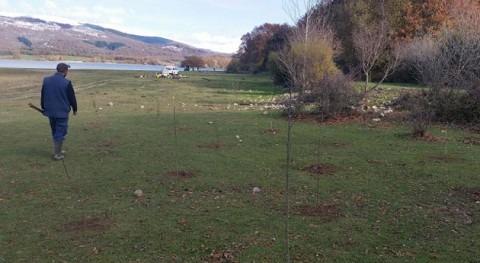 Álava planta 3.000 árboles embalse Ullibarri-Gamboa crear filtro natural agua