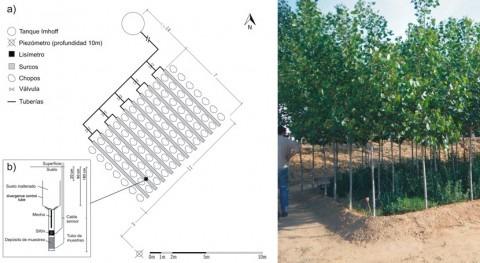 plantaciones forestales sirven como filtros verdes depurar aguas residuales