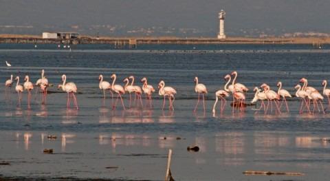 Alerta mal estado humedales Ramsar españoles